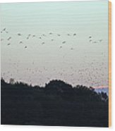 Migration Flyway Wood Print