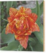 Mike's Hybrid Tulip Wood Print