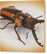 Military Stag Beetle Wood Print