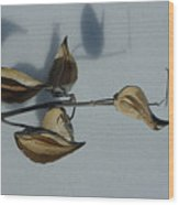 Milk Weed Pods In Snow Wood Print