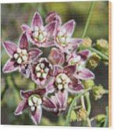 Milk Weed Vine Flowers Wood Print