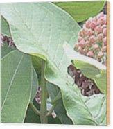 Milkweed Barcode No1 08 8 2008 Wood Print
