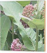 Milkweed Barcode No2 08 8 2008 Wood Print