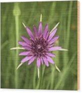 Milkweed Flower Wood Print
