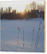 Milkweed In February At Sunrise Wood Print