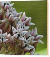 Milkweed Pink Wood Print