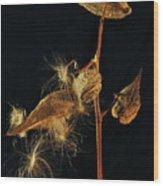 Milkweed Pods Wood Print