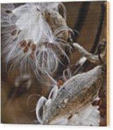 Milkweed Silk Wood Print
