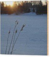 Milkweed Stems Winter Sunrise Wood Print