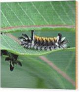 Milkweed Tussock Moth Caterpillar Wood Print