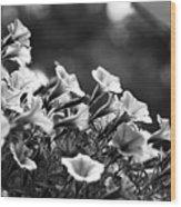 Mill Hill Inn Petunias Black And White Wood Print