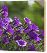 Mill Hill Inn Petunias Wood Print