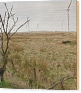 Miller's Moss. Wood Print