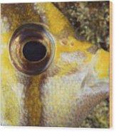 Milletseed Butterflyfish Wood Print