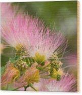 Mimosa Flower Wood Print