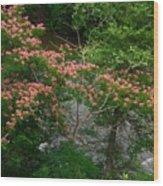 Mimosa On The Dan River Wood Print