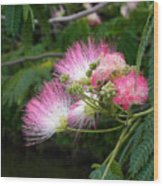 Mimosa On The Lake Wood Print