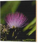 Mimosa Tree Bloom Wood Print