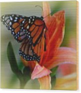 Mingle With A Monarch Wood Print
