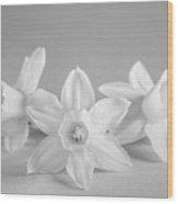 Mini Narcissus Black And White 2 Wood Print