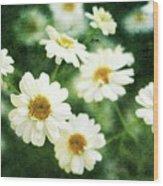 Mini Spring Daisy's Wood Print