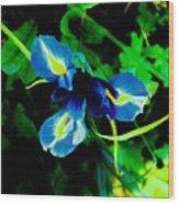 Miniature Blue Iris Wood Print