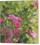 Miniature Fuchsia Roses Wood Print