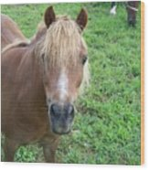 Miniature Horse Wood Print
