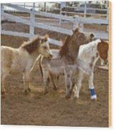 Miniature Horses Wood Print