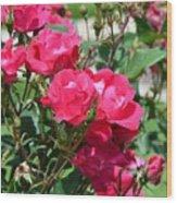 Miniature Roses Wood Print