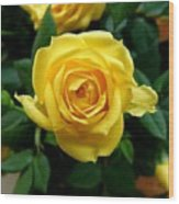 Miniature Yellow Rose Wood Print