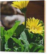 Miniature Yellow Gerbera Daisies Wood Print