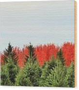 Minnesota Autumn 21 Wood Print