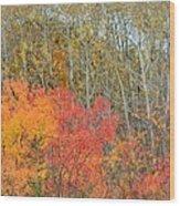 Minnesota Autumn 55 Wood Print