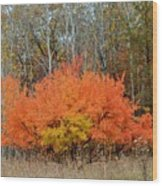 Minnesota Autumn 57 Wood Print