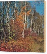 Minnesota  Autumn Path Wood Print
