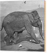 Minnie The Elephant, 1920s Wood Print