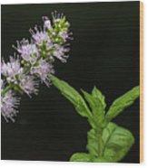 Mint Flower Wood Print