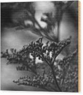 Mirrored In Sterling Wood Print