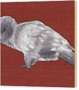 Mischievous Bird Wood Print