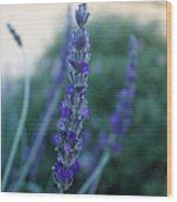 Mission Lavender Wood Print