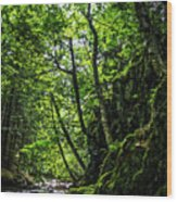 Missisquoi River In Vermont - 1 Wood Print