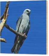 Mississippi Kite Wood Print