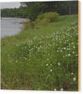 Mississippi River Bank Flowers Wood Print