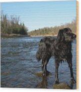 Mississippi River Dog On The Rocks Wood Print