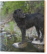 Mississippi River Posing Dog Wood Print