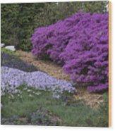 Missouri Botanical Garden Purple Azaleas Dsc01692 Wood Print