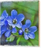 Missouri Wildflowers 5  - Polemonium Reptans -  Digital Paint 1 Wood Print