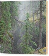 Mist Forest Wood Print