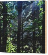 Mist, Leaves And Sunlight Wood Print